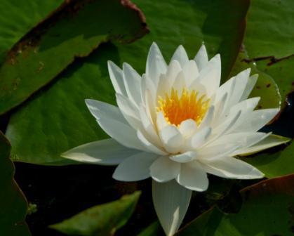 Swamp Flower